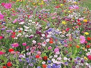 Kvetinové zmesi Tézier